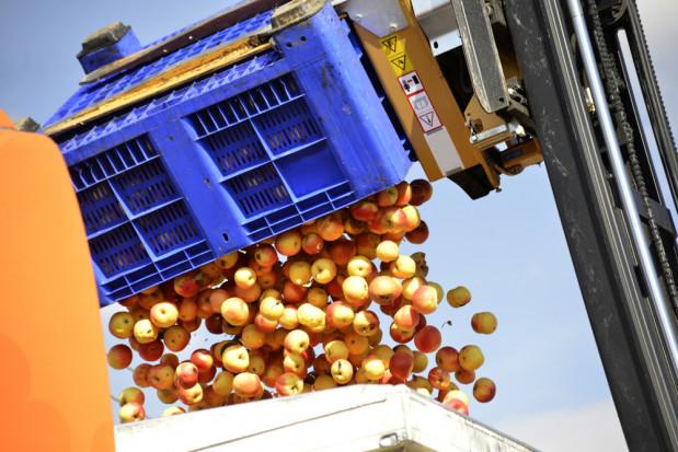 Jabłka przemysłowe: duży popyt w kraju i za granicą