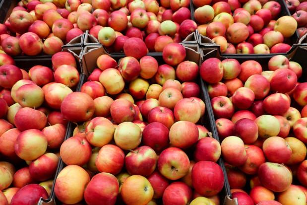 Mołdawia: eksport jabłek w styczniu 2-krotnie niższy niż w latach ubiegłych