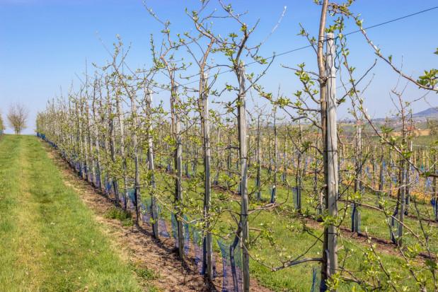 W Tadżykistanie wzrasta areał sadów i winnic