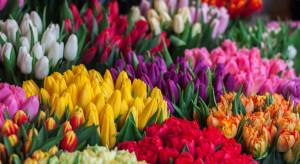 Na Broniszach duży ruch w handlu kwiatami na Dzień Kobiet