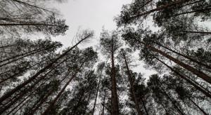Ruszają prace zw. z planem dla Puszczy Białowieskiej jako dziedzictwem UNESCO