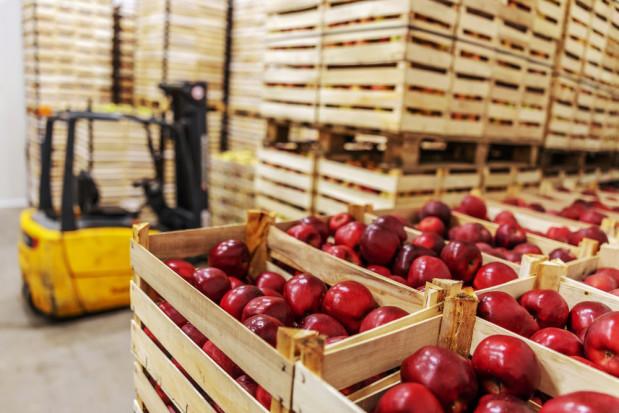 Ceny jabłek na sortowanie: eksporterzy mówią o spadku sprzedaży i słabej jakości