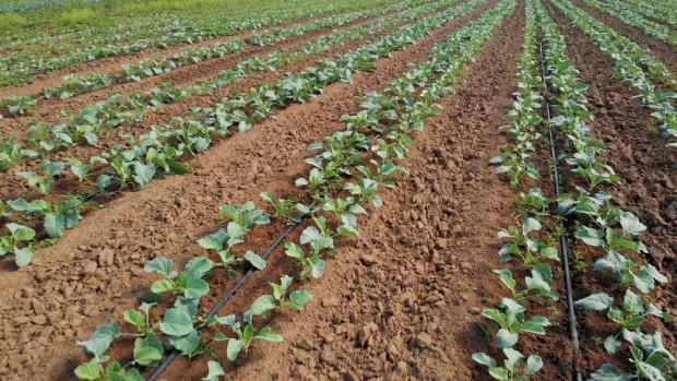 Bioprodukty mikrobiologiczne poprawiają żyzność gleby i jakość plonów