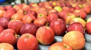 Eksporter: Zwalnia popyt na polskie jabłka ze strony Egiptu
