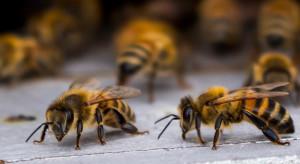 Pszczoły gotowe do nowego sezonu