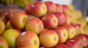 Eksporter: Oczekiwania Francuzów wobec polskich jabłek są bardzo wysokie
