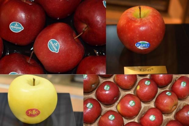 Sadownicy w Europie Zachodniej inwestują w klubowe odmiany jabłoni (foto)