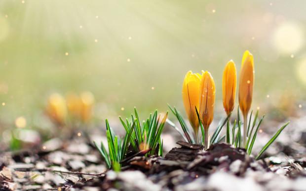 W najbliższą sobotę rozpocznie się astronomiczna wiosna