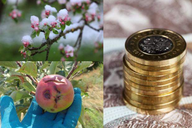 Kiedy początek sprzedaży ubezpieczeń upraw z dopłatą?