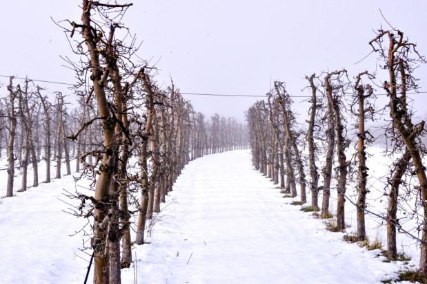Piątkowe popołudnie z opadami śniegu, wieczorem możliwe oblodzenia
