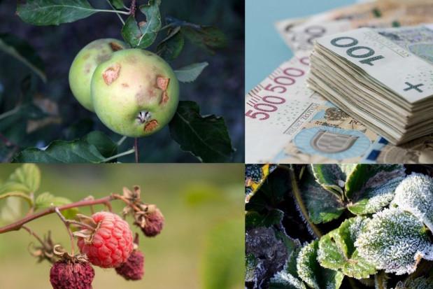 PZU: rusza wiosenny sezon ubezpieczania upraw