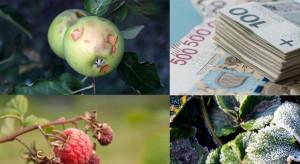 PZU: od 25 marca można ubezpieczyć uprawy z państwową dopłatą