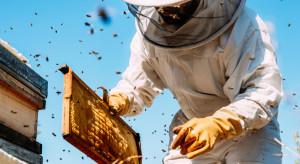 W tym roku pszczelarze mogą liczyć na milionowe wsparcie