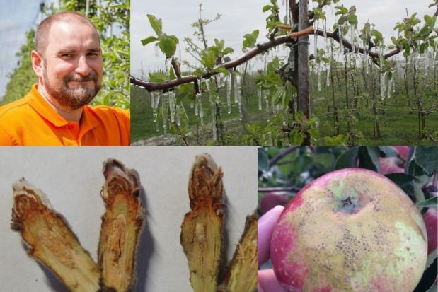 Mróz, przymrozek a stres i uszkodzenia w uprawach sadowniczych (foto)