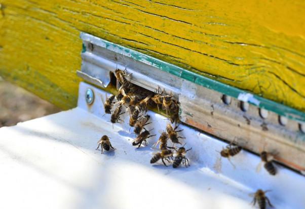Ruszyło badanie strat zimowych rodzin pszczelich
