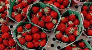12 zł za kg truskawek w Biedronce