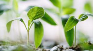 UE chce, aby do 2030 r. uprawy ekologiczne stanowiły 1/4 użytków rolnych