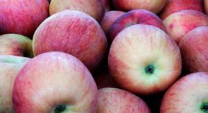 Eksporter: sezon na wszystkie polskie jabłka jeszcze się nie zakończył