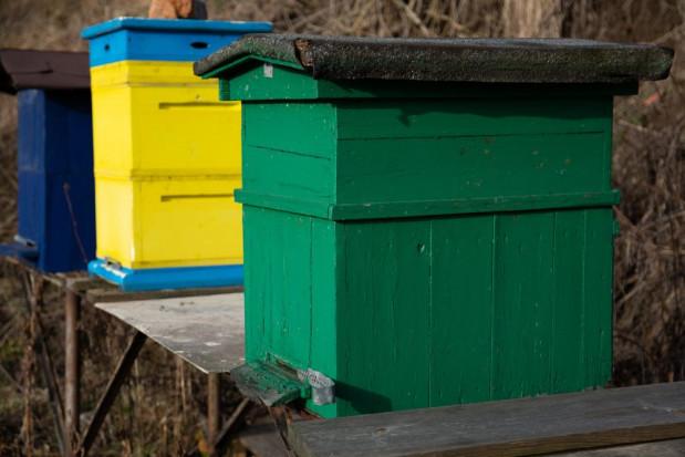 Lubuskie: skradziono 71 uli wraz rodzinami pszczelimi
