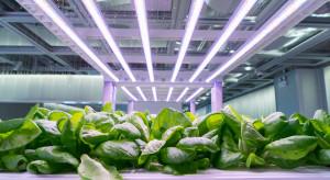 Hydroponika zdominuje tradycyjne uprawy owoców i warzyw?