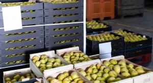 Przechowalnictwo jabłek: Jaka sytuacja w komorach chłodniczych?