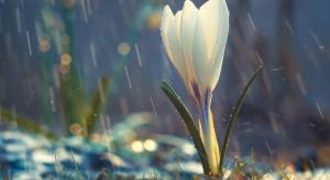 Pogoda na 30.03: Lekki deszcz i lokalne rozpogodzenia