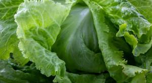 Hiszpania: Spadki temperatur mogą dodatkowo zmniejszyć podaż warzyw