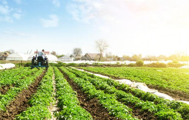 CopaCogeca: producenci ekologiczni muszą mieć dostęp do skutecznych śor
