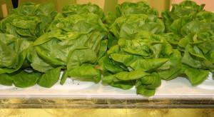 Instytut Ogrodnictwa-PIB pracuje nad nowymi odmianami warzyw