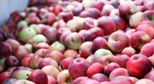 Jabłka przemysłowe tanieją. Co będzie się działo z cenami po świętach?