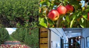 Produkcja jabłek, szkółkarstwo, przechowalnictwo - jak rozwija się w Rosji?
