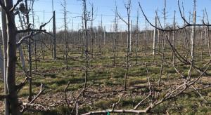 Nawożenie sadów wiosną - kiedy i w jakiej postaci dostarczać azot?
