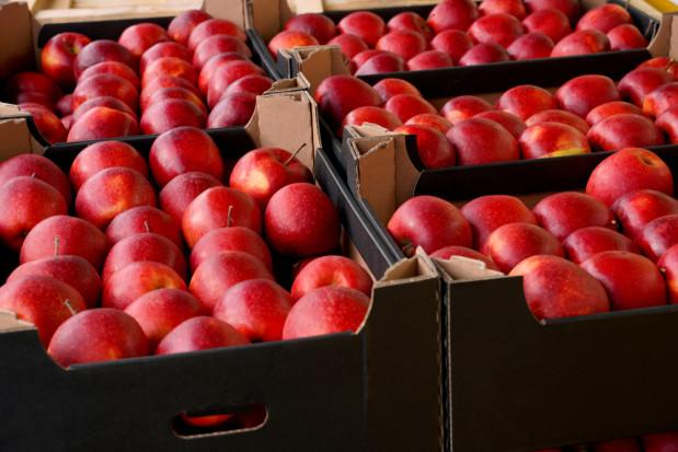 Rosja: import jabłek w styczniu niższy o 1/3