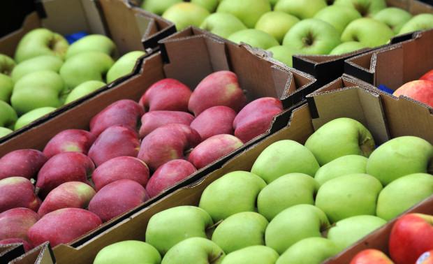 Mazowieckie: Jakie ceny i popyt jabłek na sortowanie?