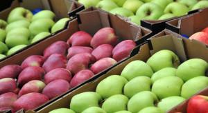 Mazowieckie: sprawdzamy popyt i ceny jabłek na sortowanie przed świętami