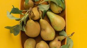 WAPA: gruszek więcej niż rok temu