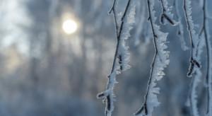 IMGW ostrzega przed przymrozkami na północy i śniegiem na południu
