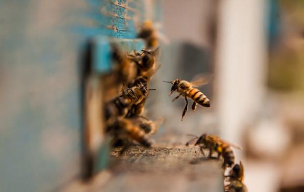 Warmia i Mazury: pszczoły dobrze przezimowały, zaszkodzić im może ochłodzenie