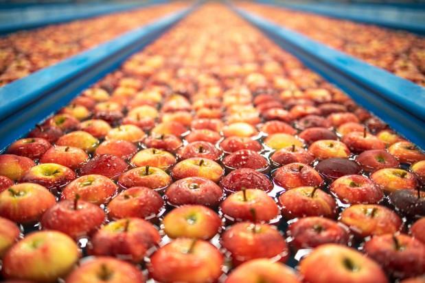 Tempo upłynniania zapasów jabłek niższe niż przed rokiem