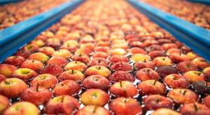 Rynek jabłek deserowych 2021: popyt, zapasy i ceny