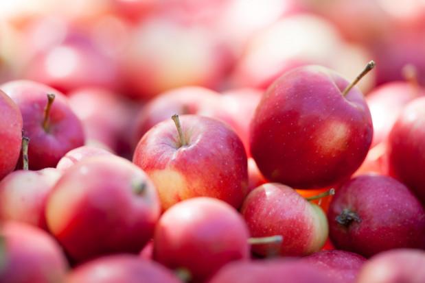 Eksporter: Sezon jabłkowy nadal trwa. Ceny będą powoli rosły
