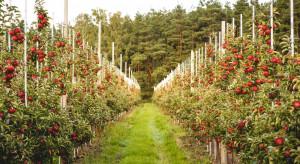 Jakie wyzwania czekają sadowników w sezonie 2021?