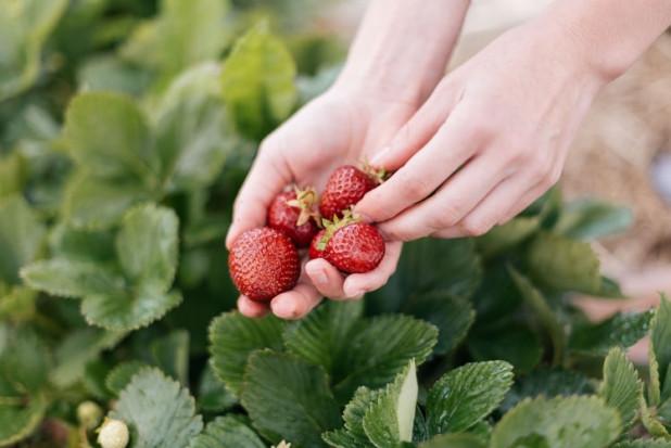 Huelva: Producenci truskawek domagają się uczciwych cen za owoce