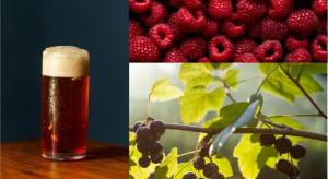 Powstanie piwo z dodatkiem grójeckich owoców