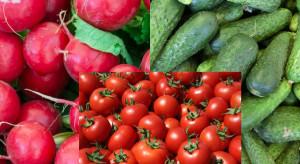 Bronisze: spadają ceny krajowych ogórków, pomidorów i rzodkiewki