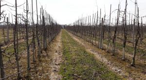 Nawożenie sadów wiosną - azot, potas, fosfor, magnez