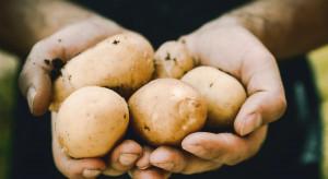 Sosnowiec: rolnik chciał rozdać 10 t ziemniaków. Mieszkańcy je kupili