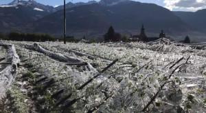 Południowy Tyrol: Katastrofalny efekt walki z mrozem w sadzie
