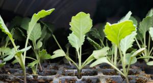 Grupa Mularski sprzedaje sadzonki w Lidlu