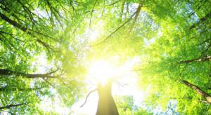 Ruszy  nabór na inwestycje zwiększające odporność ekosystemów leśnych